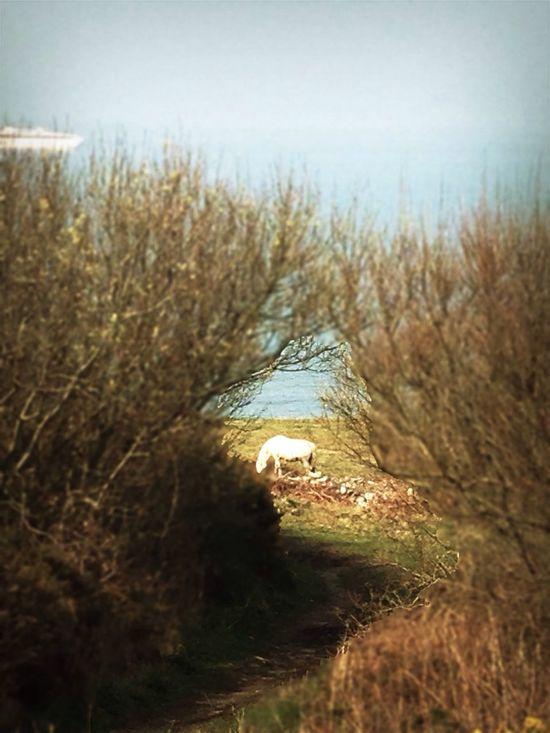 White Pony Countryside Sea And Sky Stenna Line