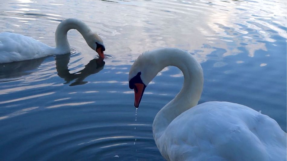 Beautiful stock photos of river, Animal Neck, Animal Themes, Animals In The Wild, Beak