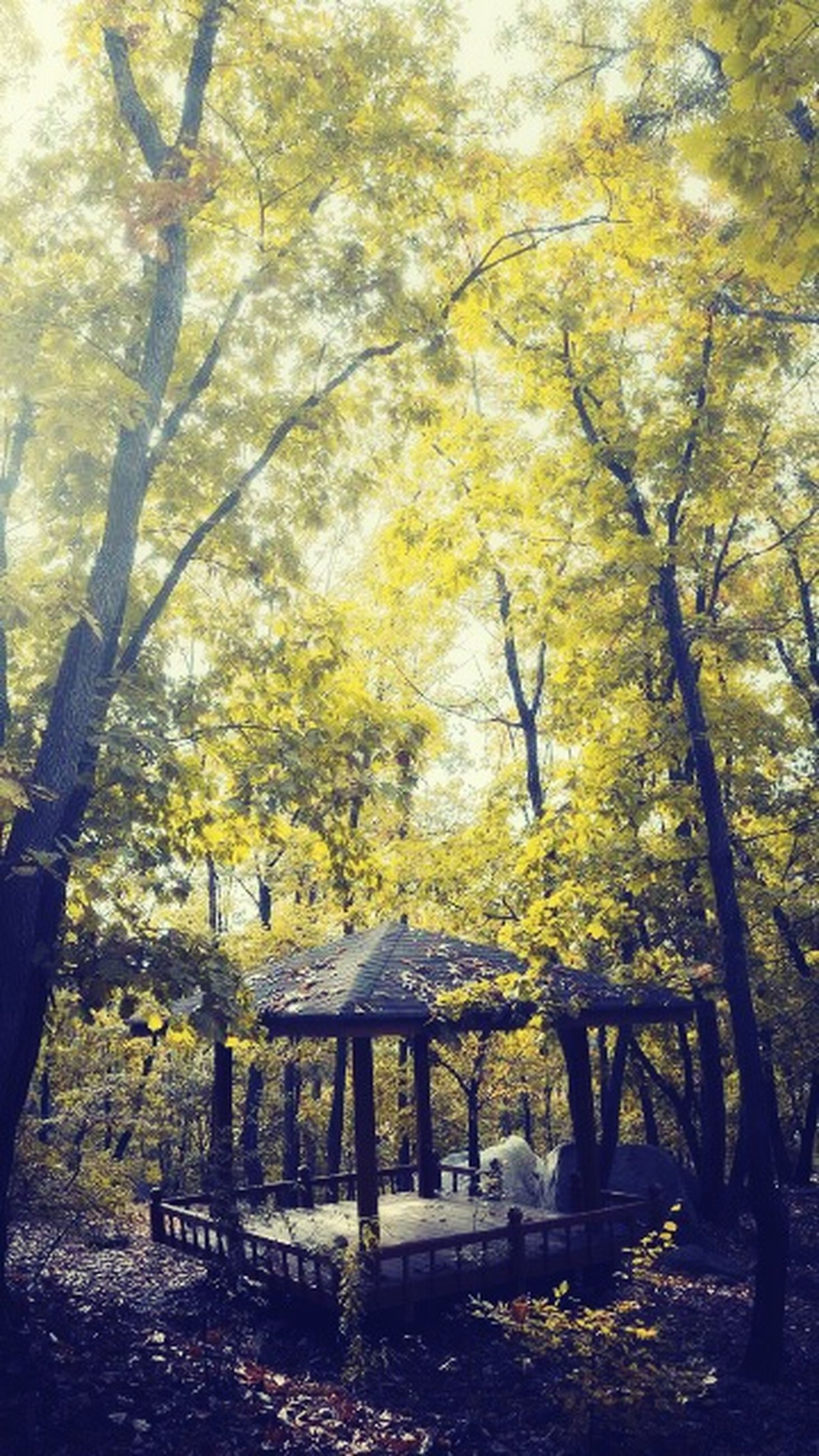 tree, tree trunk, branch, autumn, growth, nature, tranquility, change, park - man made space, beauty in nature, day, yellow, sunlight, forest, outdoors, season, tranquil scene, scenics, no people, low angle view