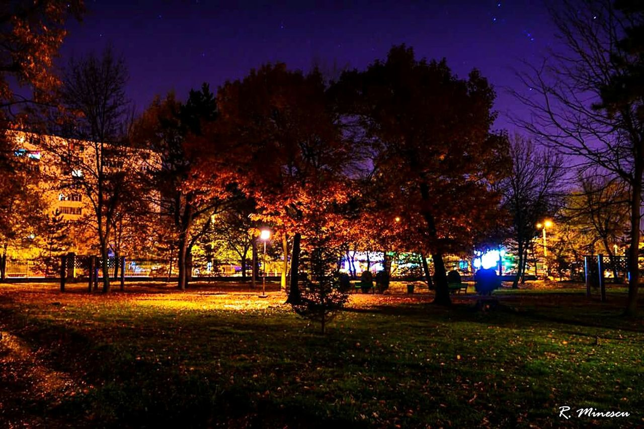 Night Landscape No People Stars At Night Midnight Outdoors Park Sky Illuminated Colorsplash Nature Autumn Leaves Green Color First Eyeem Photo