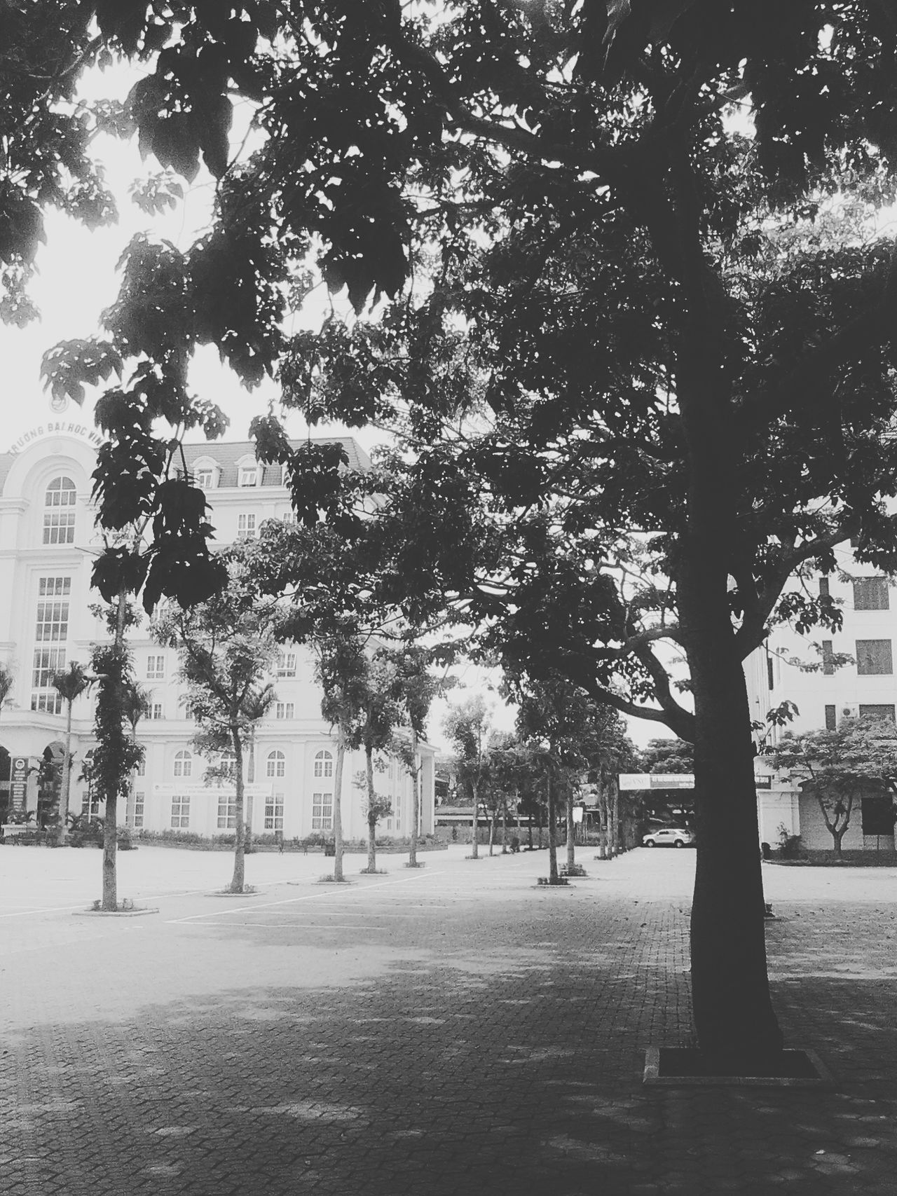 MySchool Nice View Trees Taking Photos Relaxing Hello World