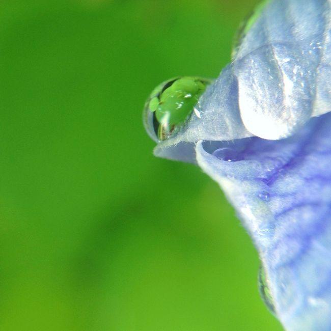Eye4photography  Flowerporn Iphonegraphy EyeEm Nature Lover