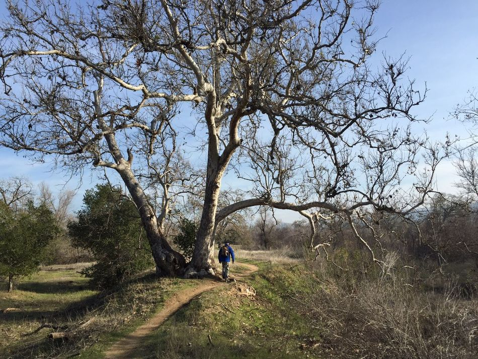 Day 5: a walk through Hobbit land. 365.2015 Ifollowedtheyellowbrickroadtoday