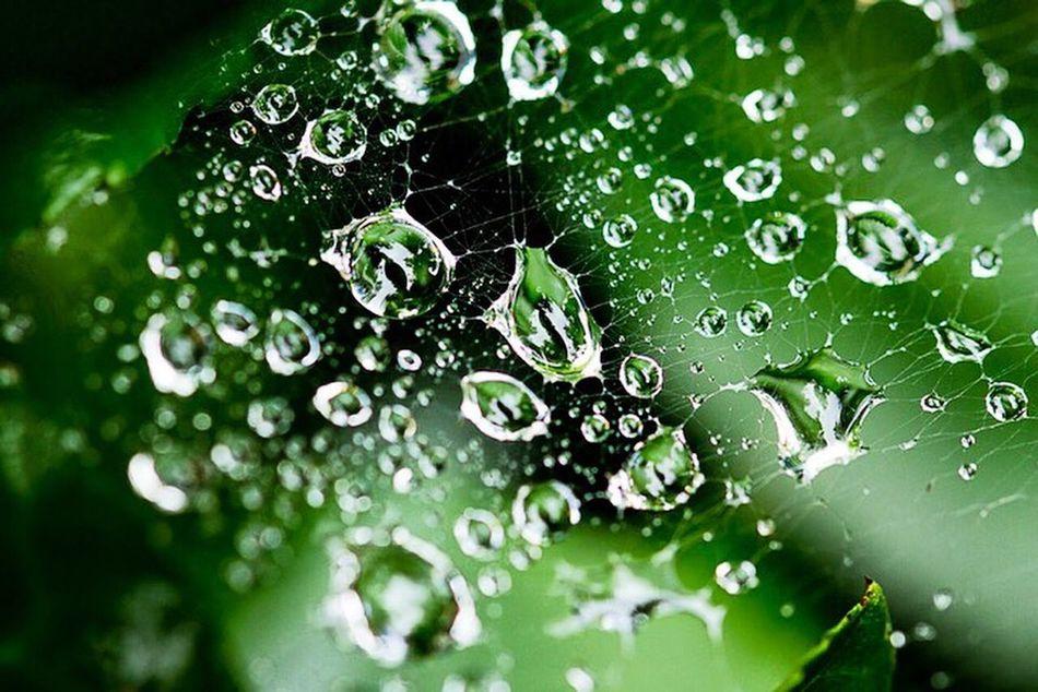 Rainy day spider web Showcase:July