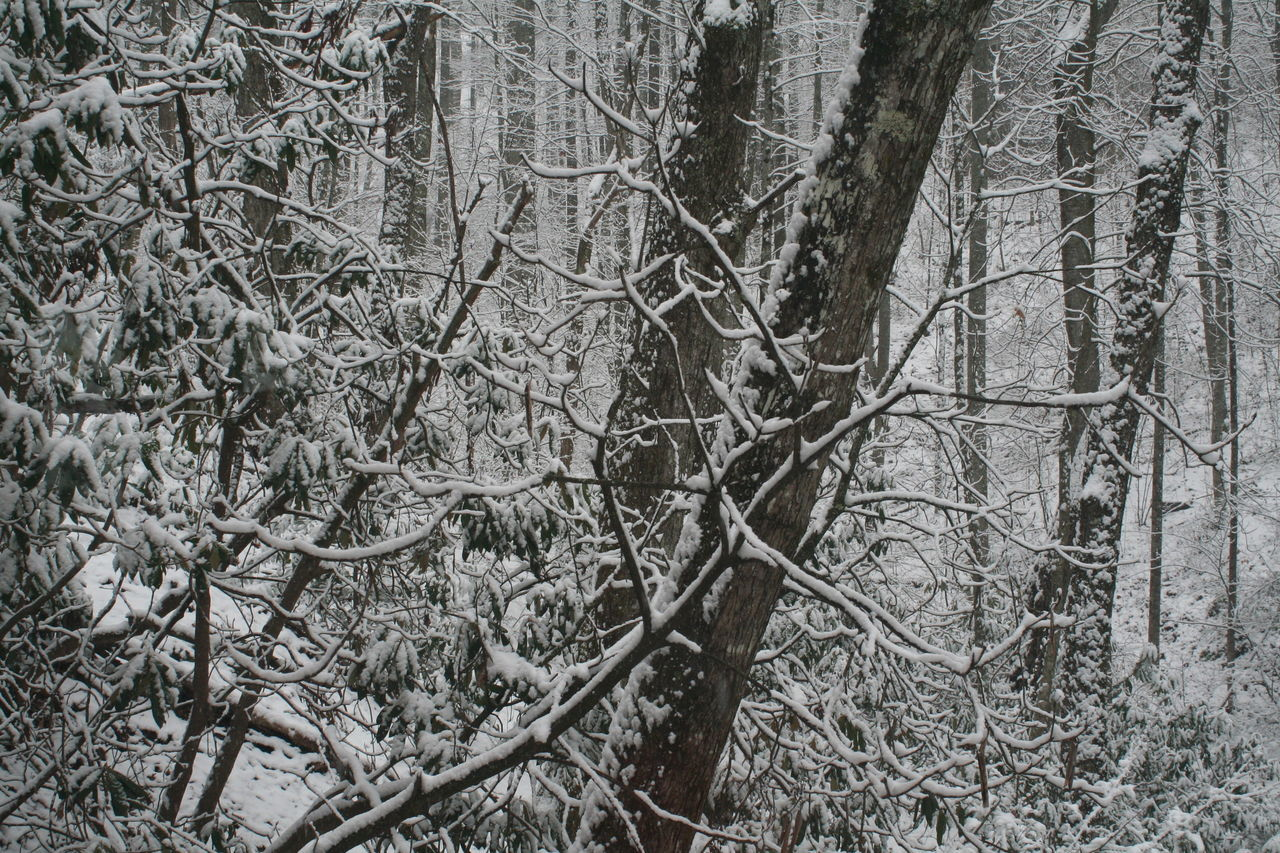 Backgrounds Beauty In Nature Close-up Cold Temperature Full Frame Landscape Nature Non-urban Scene Outdoors Scenics Season  Snow Tenessee Tenessee Scenery Tranquil Scene Tranquility Tree Weather Winter WoodLand
