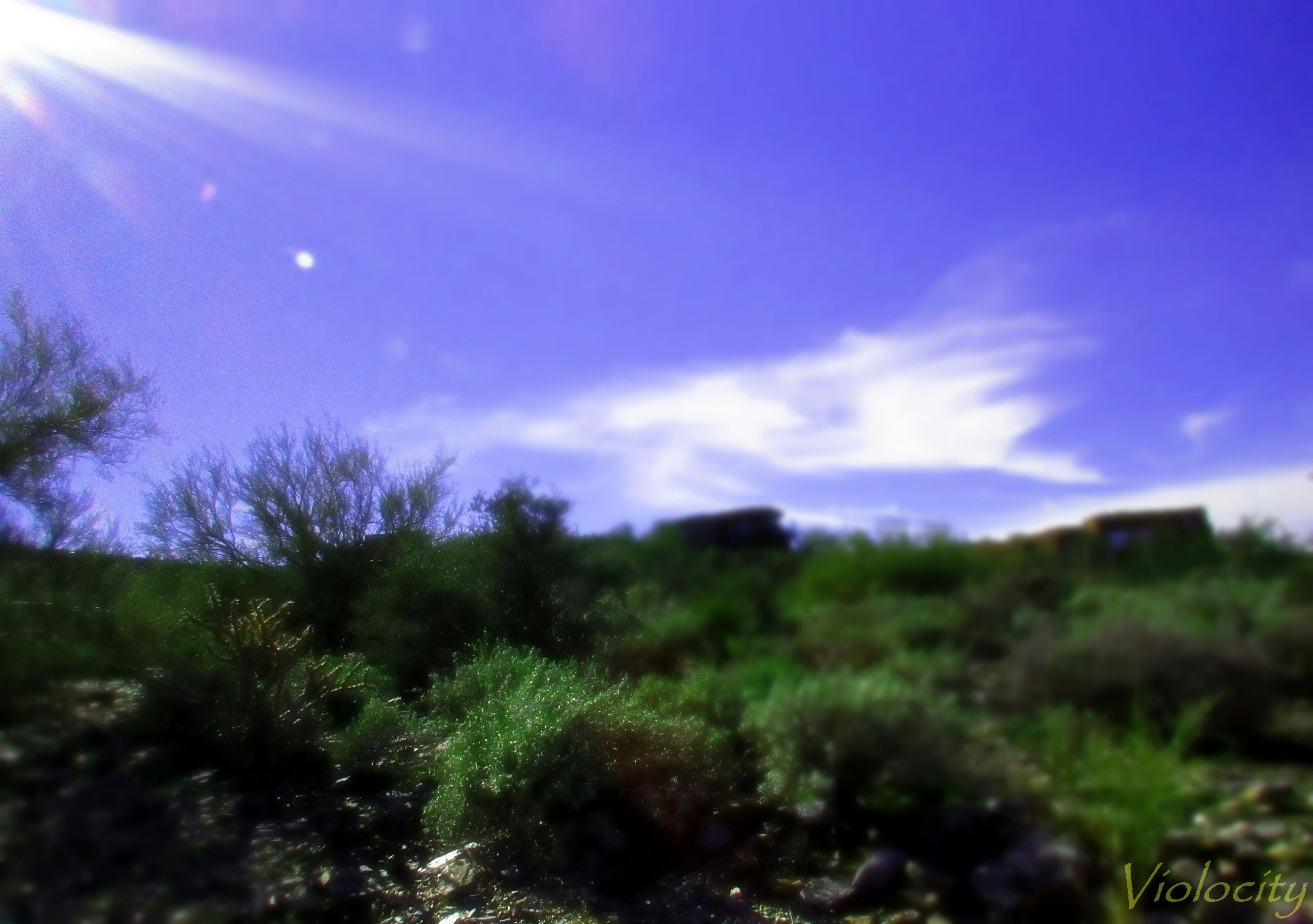 sky, beauty in nature, tranquility, blue, tranquil scene, nature, scenics, growth, plant, grass, green color, landscape, tree, field, cloud - sky, outdoors, non-urban scene, idyllic, sunlight, lens flare