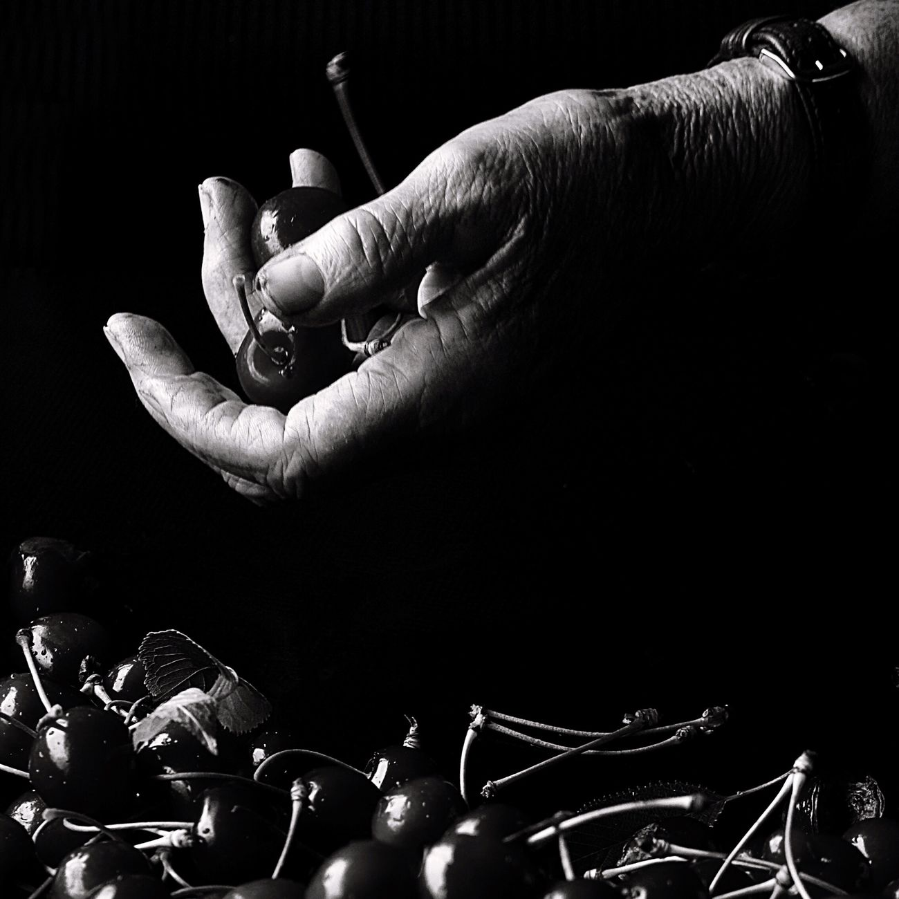 Human Hand Human Body Part Human Finger Black Background Real People Documentary Cherries Black And White Break The Mold Farm Life Fruit Working Hands Black & White Natural Light