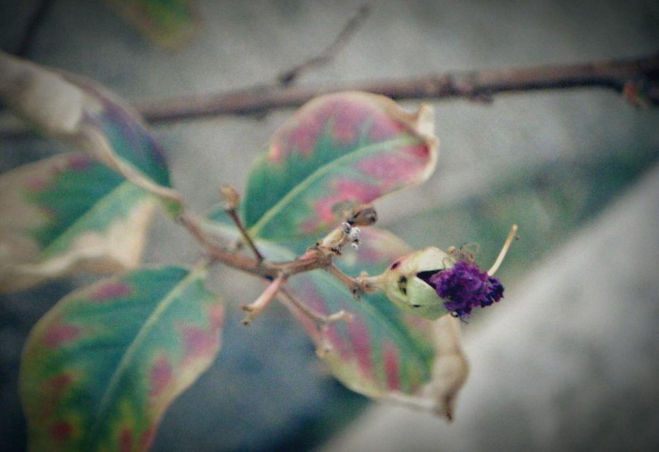 New Beginning Plants 🌱 Beautiful Nature Beautiful Colors