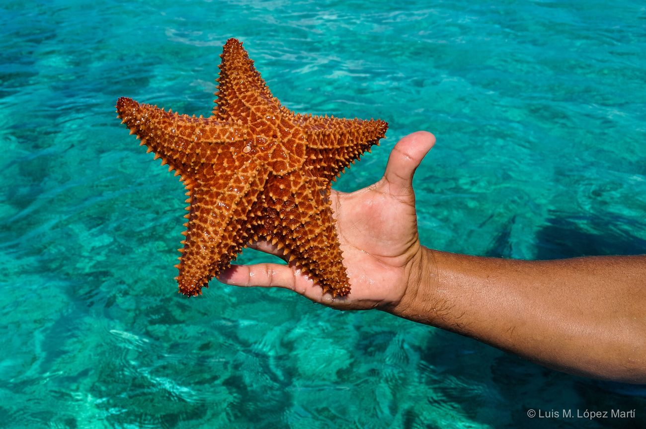 Roatán Island, Honduras Starfish  Sea Life Beauty In Nature Animal Wildlife Underwater Nature Color Colors Colorful Colour Of Life Colours Nikon Nikonphotography Photography Photo Sea Nature Nature Photography Blue Green Travel Destinations Travel Traveling Animals