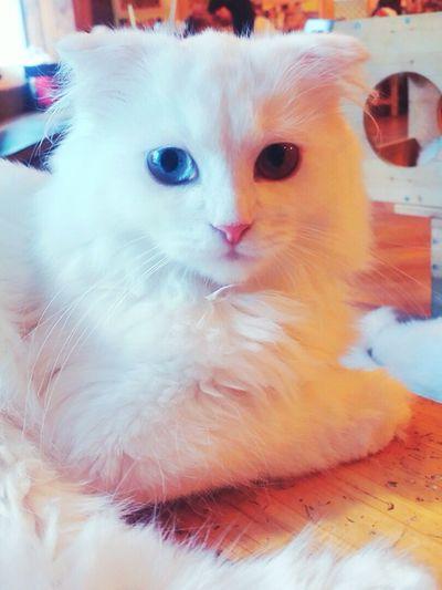 150814 😍😙😙😙😍😍😙😻😻😻 Cat 😚