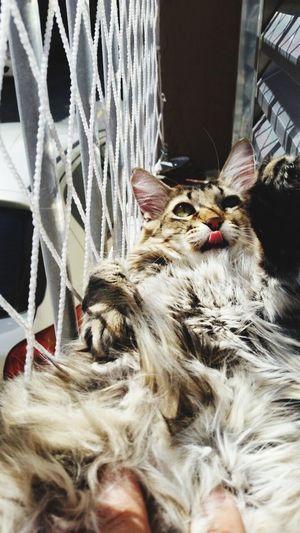 Hello World Brasil ♥ That's Me I Love My Cats  I Love My Cat Lovecats❤️ Cats Cat Cat♡ Enjoying Life