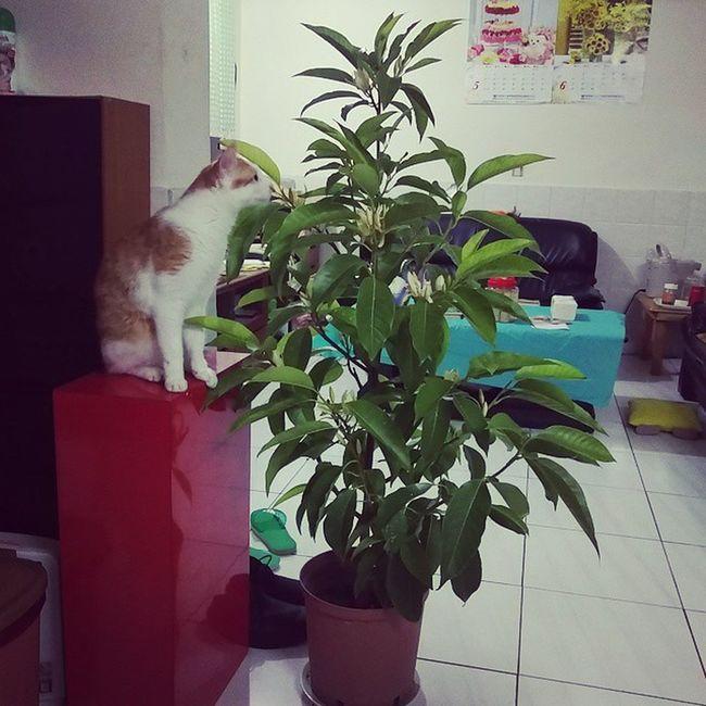 牠對於這盆花展露出了興趣. 小黃 屁貓