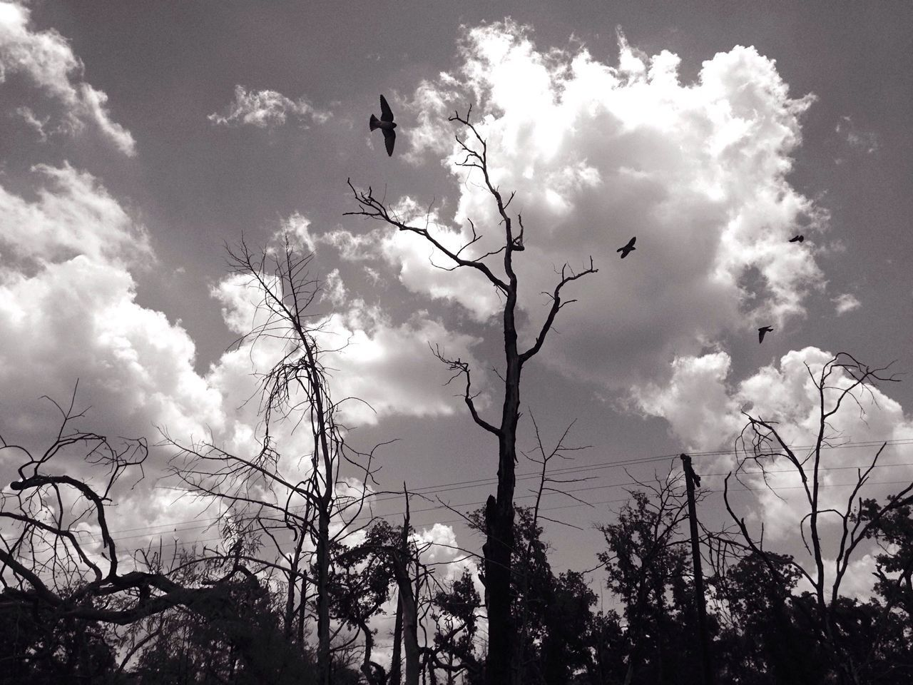 One of our favorite photographs, this monochromatic masterpiece features birds in flight around ominous looking trees. Birds Art This Week On Eye Em Landscape Gorgeous Beautiful Monochrome South Texas Composition