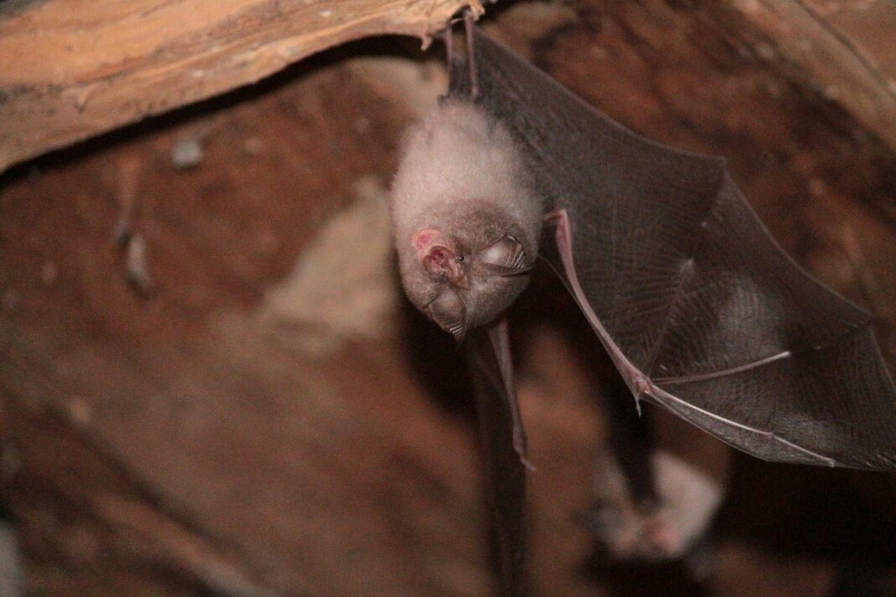 animals,bat,fauna Bat Animals Fauna