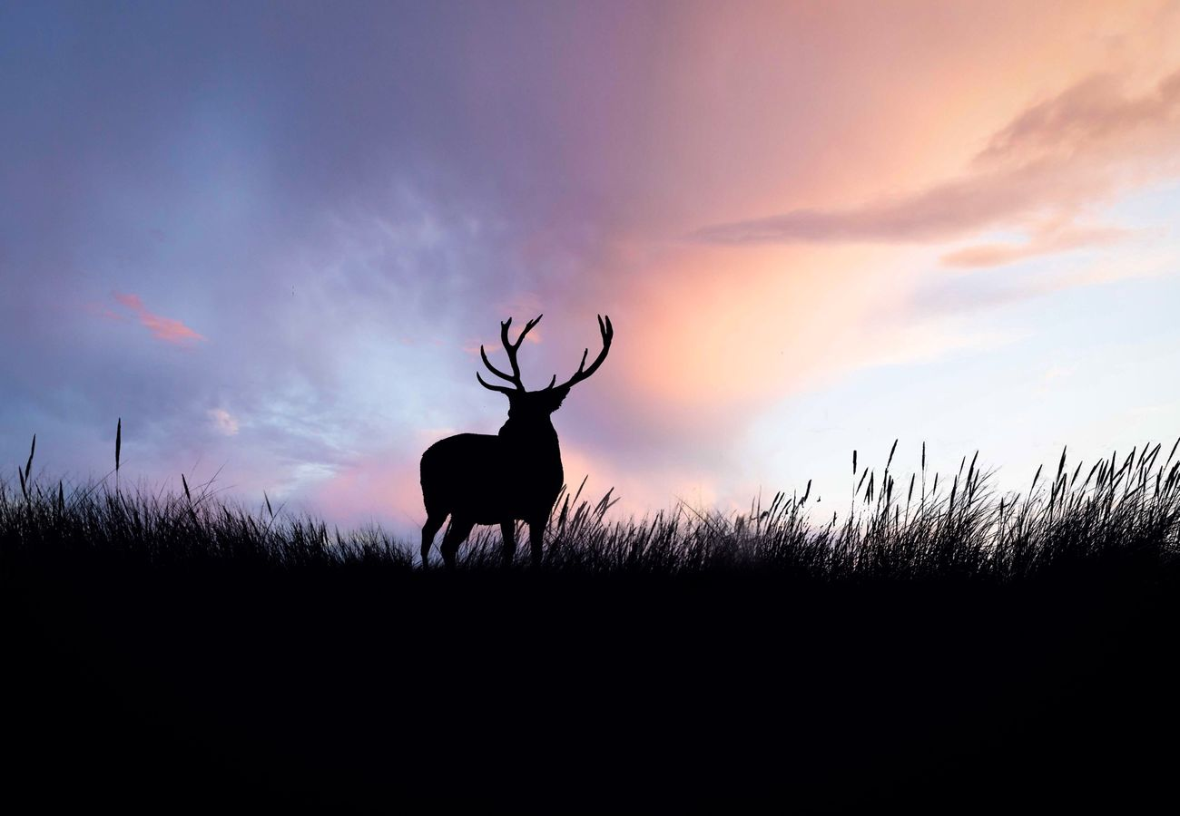 Beautiful stock photos of deer, Animal Themes, Animal Wildlife, Animals In The Wild, Cloud - Sky