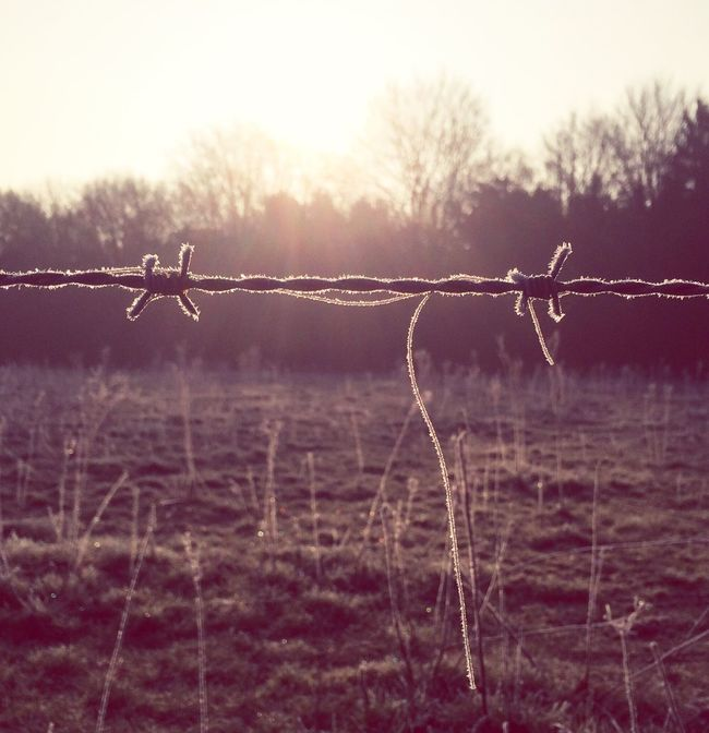 Barbed Wire Winter Wonderland March Showcase Early Morning Cold