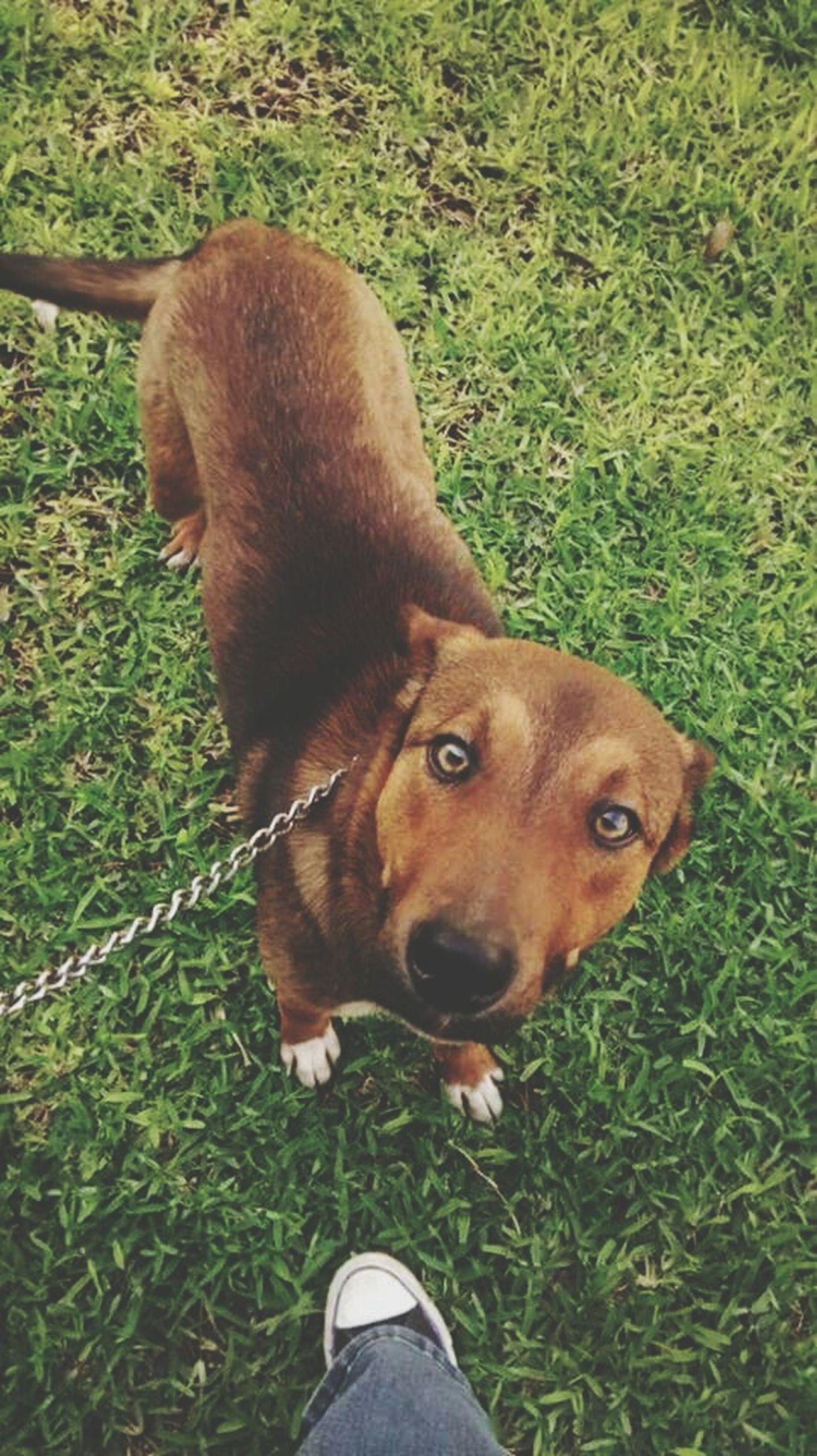 Me Enamore De Sus Ojos ❤️👌☺️ Doggie Mi Bebesito