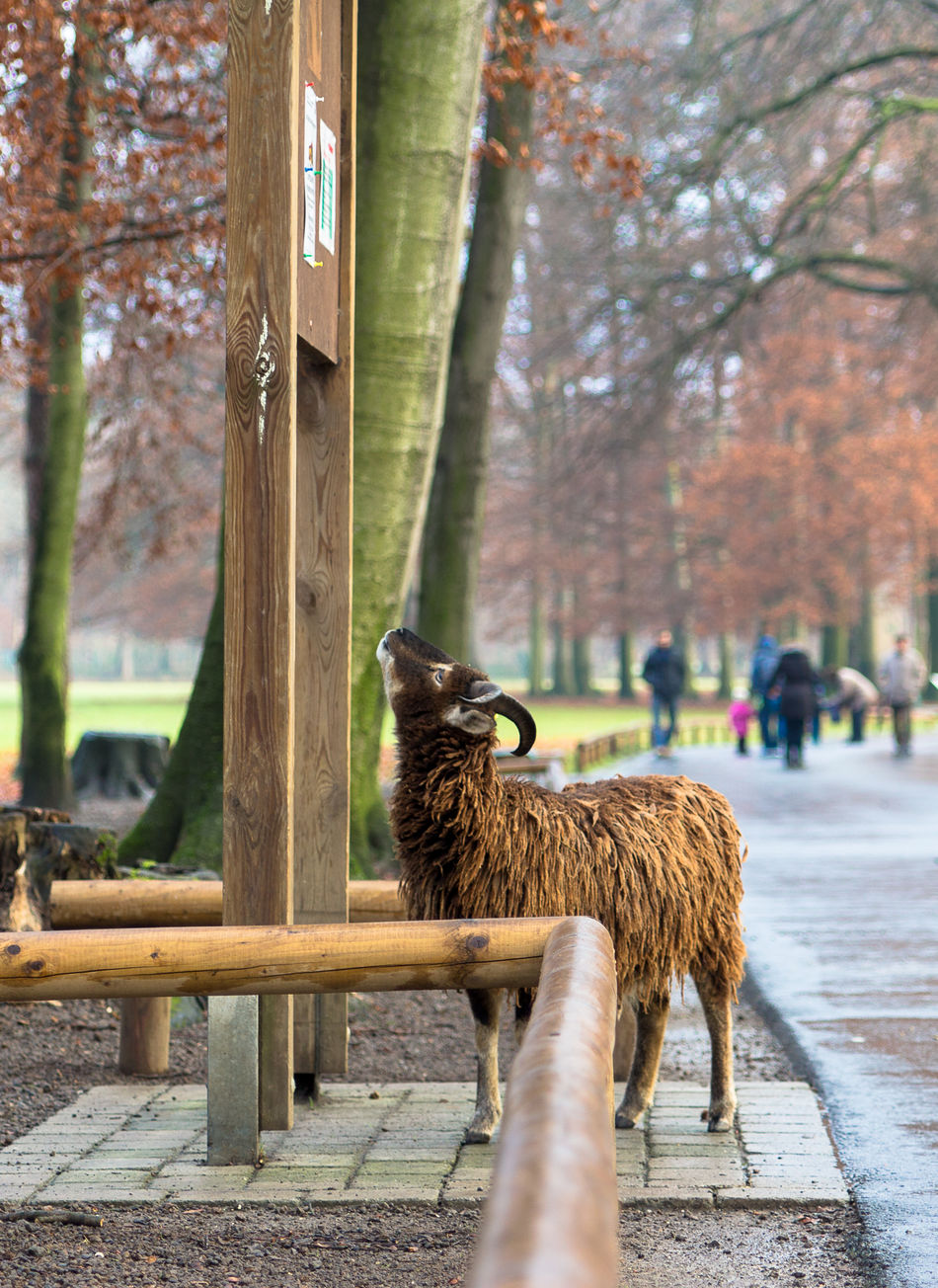 Beautiful stock photos of sheep, Animal Themes, Day, Domestic Animals, Incidental People