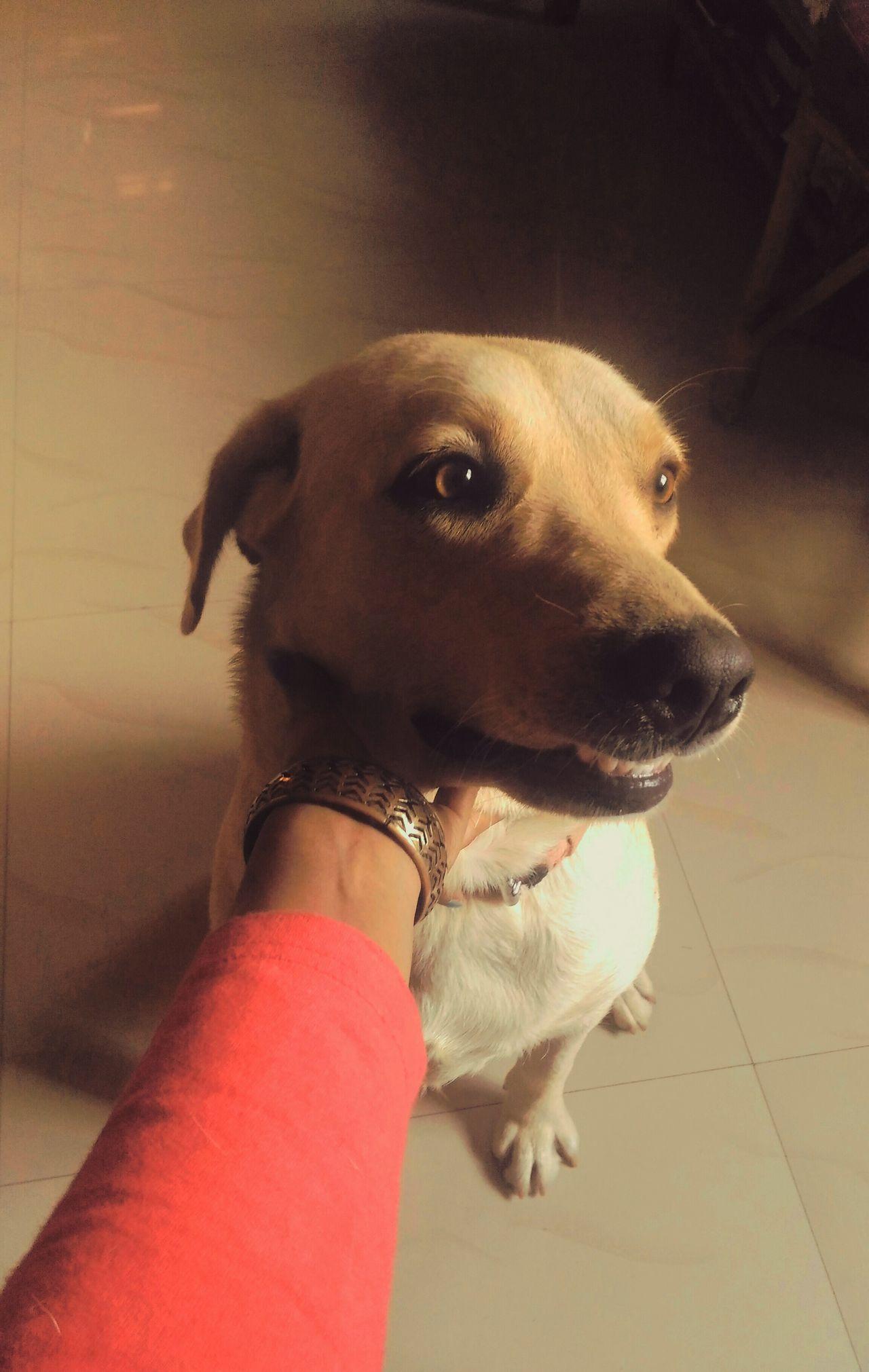 Dog Doggy Love Love ♥ Doggy Love Pet Animallovers