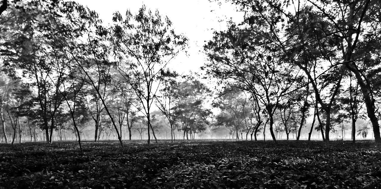 Nature Tree Tranquility No People Outdoors Landscape Beauty In Nature Morning View Fog Getting Inspired Plant EyeEm Masterclass Popular Mobilephotography Agriculture Shutterbug EyeEm Best Shots EyeEm Gallery Capture The Moment Exceptional Photographs EyeEm Nature Lover Growth Scenics Blackandwhite Photography Morning Sunrise☀