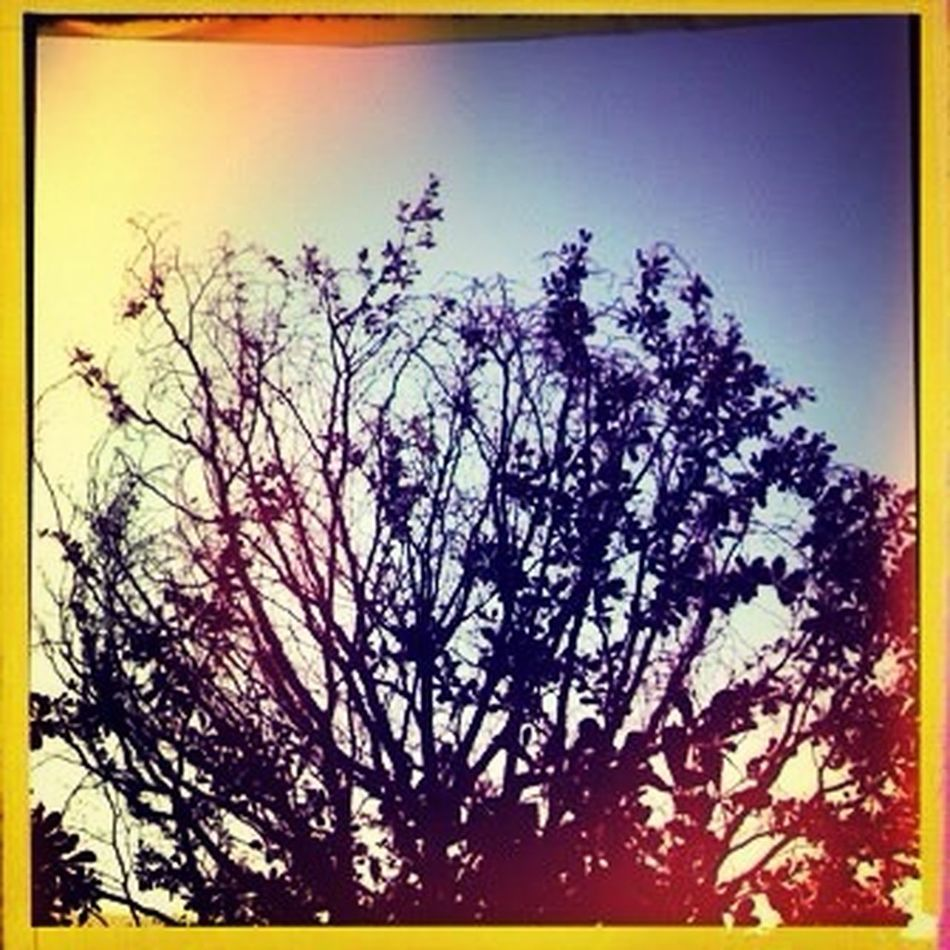 A cold wind was blowing from the north, and it made the trees rustle like living things.