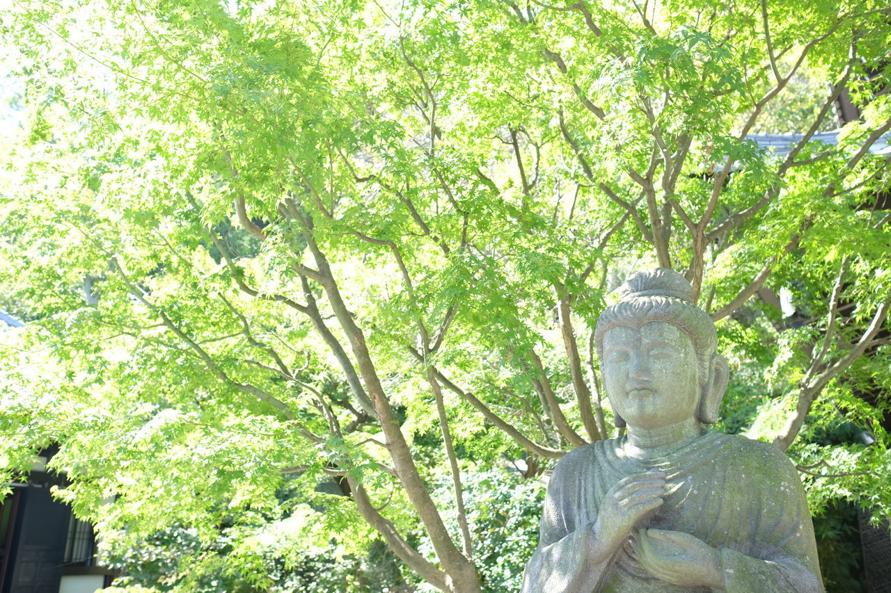 statue, sculpture, human representation, male likeness, tree, no people, religion, spirituality, day, outdoors, nature