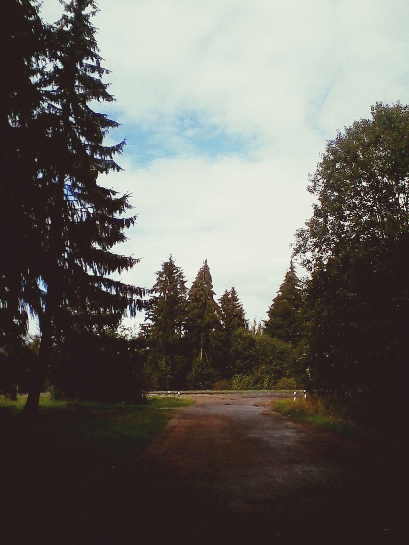 лес и природа Лес🙈