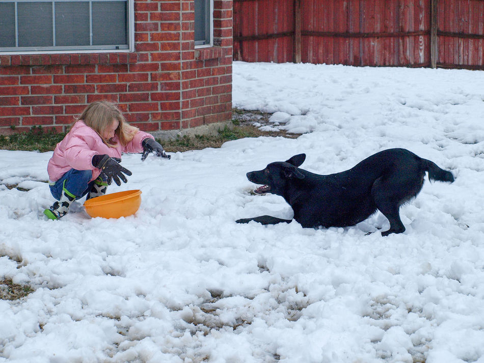 Animal Themes Child And Dog Childhood Cold Temperature Day Dog Domestic Animals Full Length Girl With Dog Mammal Nature Outdoors People Pets Play With Dogs Real People Snow Togetherness Warm Clothing Weather Winter