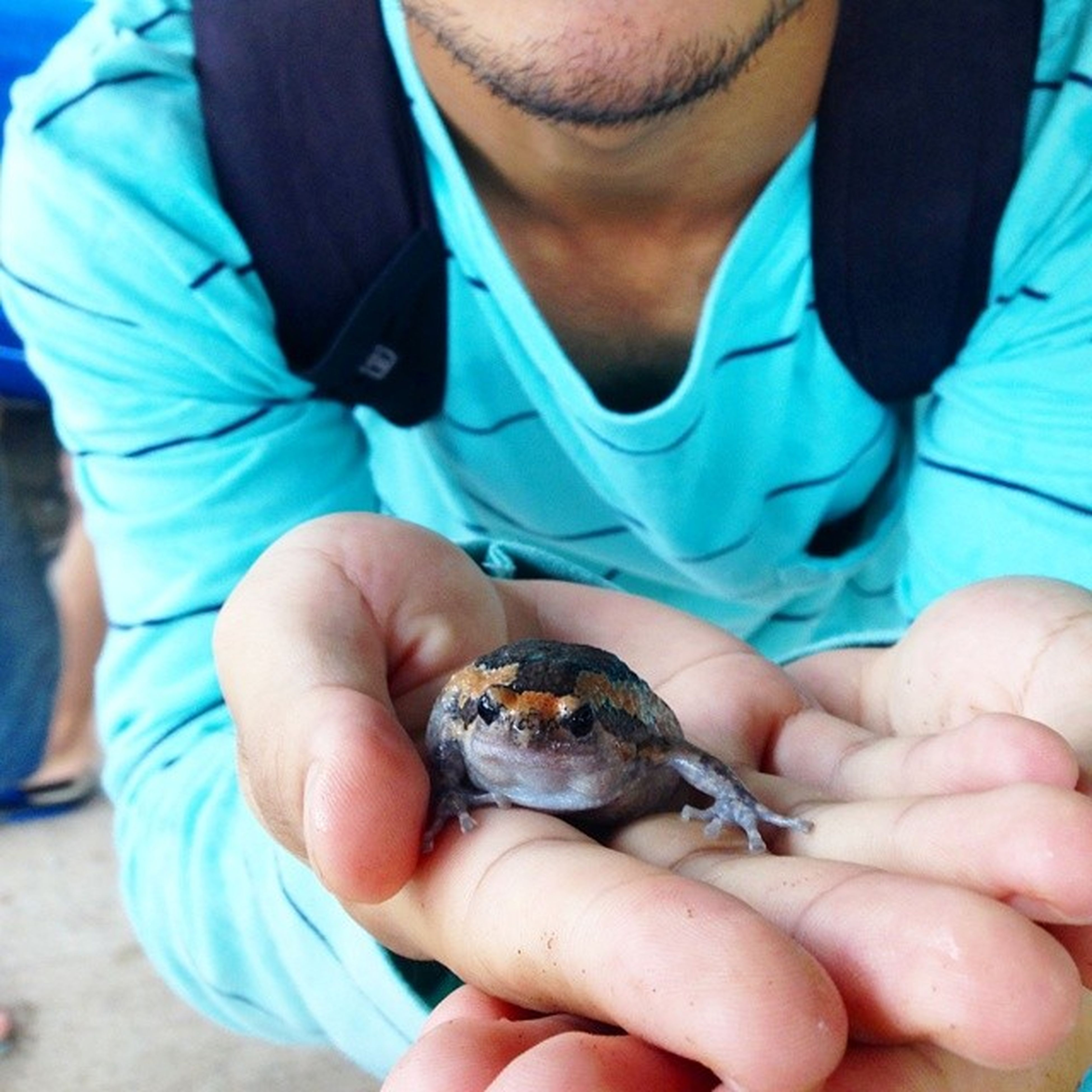 person, animal themes, holding, one animal, lifestyles, leisure activity, men, animals in the wild, part of, wildlife, human finger, close-up, care, togetherness, unrecognizable person, cropped