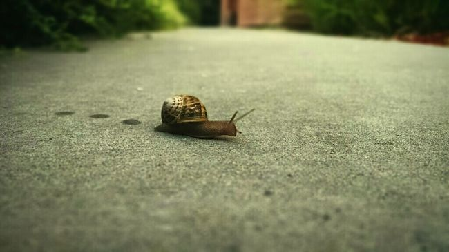 Just a Snail trying to cross the Sidewalk as I was headed out to work.