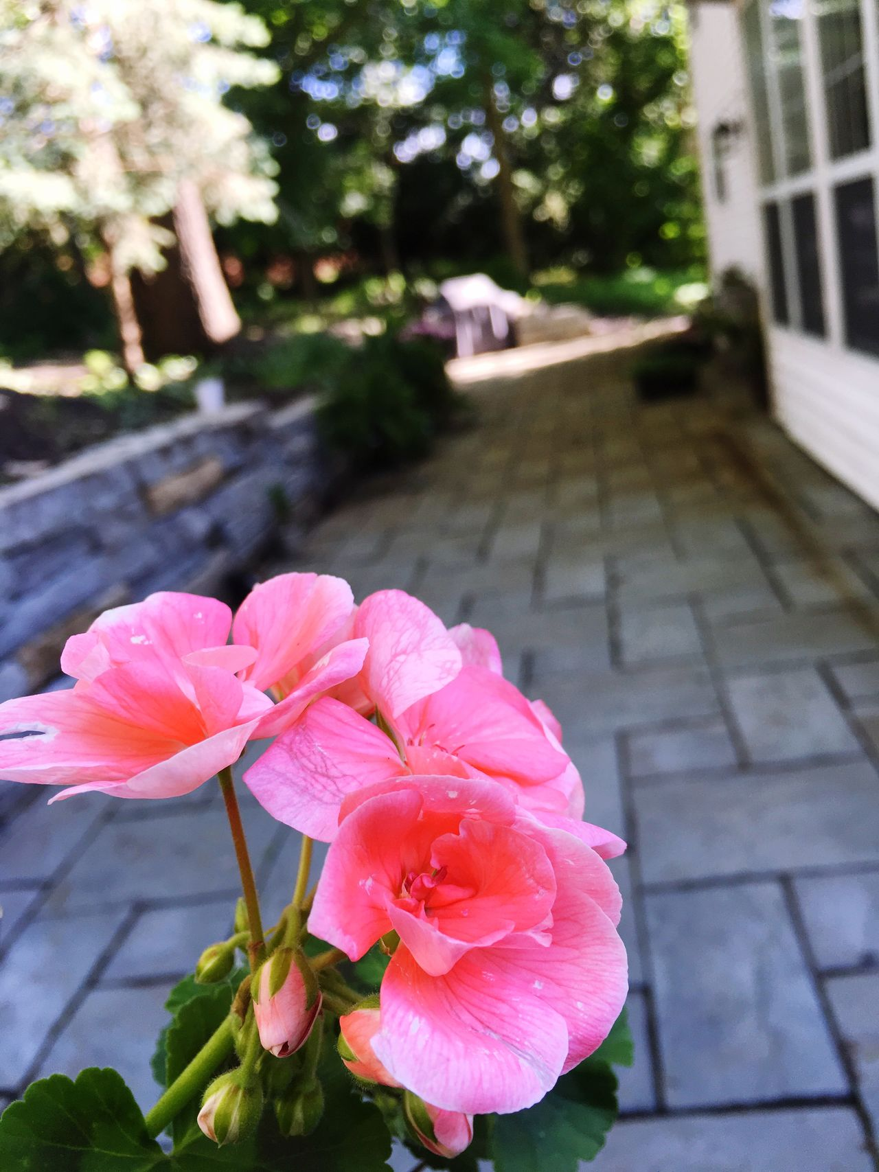Home sweet home Home Sweet Home Quiet Noon Pink Flower Geranium