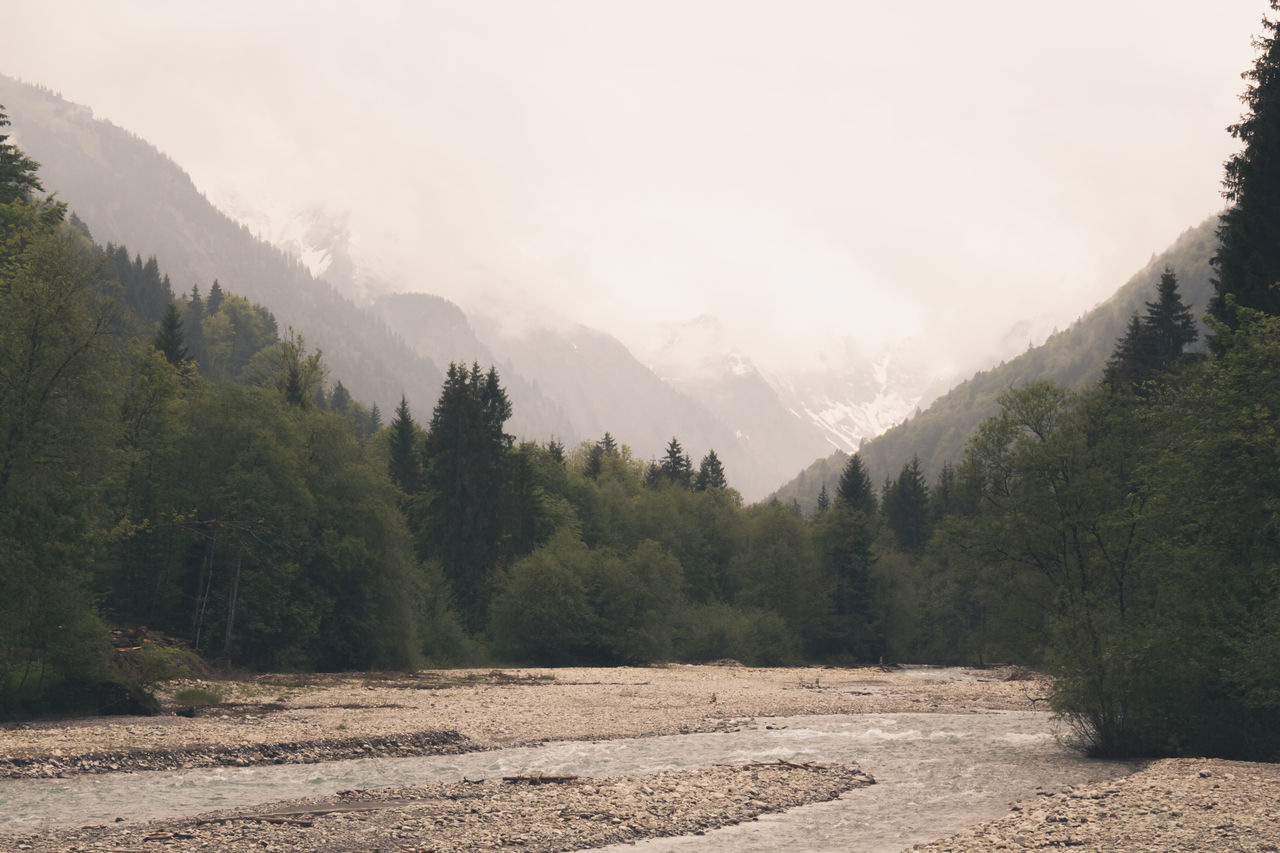Beautiful stock photos of baum, Alpen, Beauty In Nature, Day, Fog
