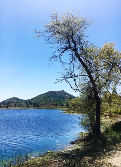 Tree Beauty In Nature Nature Water Mountain Tranquil Scene Scenics Tranquility Lake No People Blue Clear Sky Outdoors Day Sky Landscape Mountain Range Branch Cuyamaca State Park