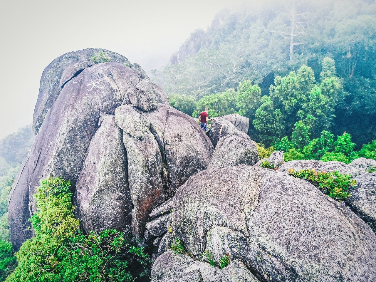 Climbing in the clouds Seychelles Tree Outdoors Beautiful Landscape Travel Travelphotography Wanderlust Island Amazing Amazing View Islandlife Beautifuldestinations Travel Destinations Mountain Explore Beauty In Nature Clouds Nature_collection Nature Landscape_Collection Vacations EyeEm Best Shots Tree Hiking