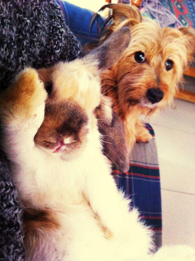 Mypet My Dog Rabbit Bbf