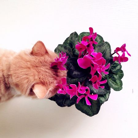 Cat Check This Out Have Fun Taking Photos Life Living Life Enjoying Life Hello World Cheese!