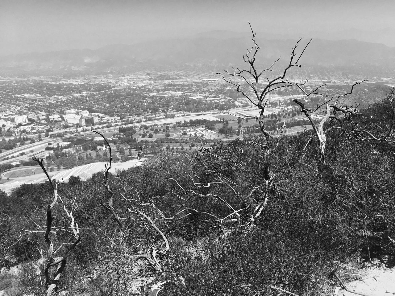 Hollywood Hills Beauty In Nature California Cloud - Sky Day Film Noir Growth Hiking Hollywood Hills Landscape Los Ángeles Monochrome Nature No People Outdoors Sky Tree