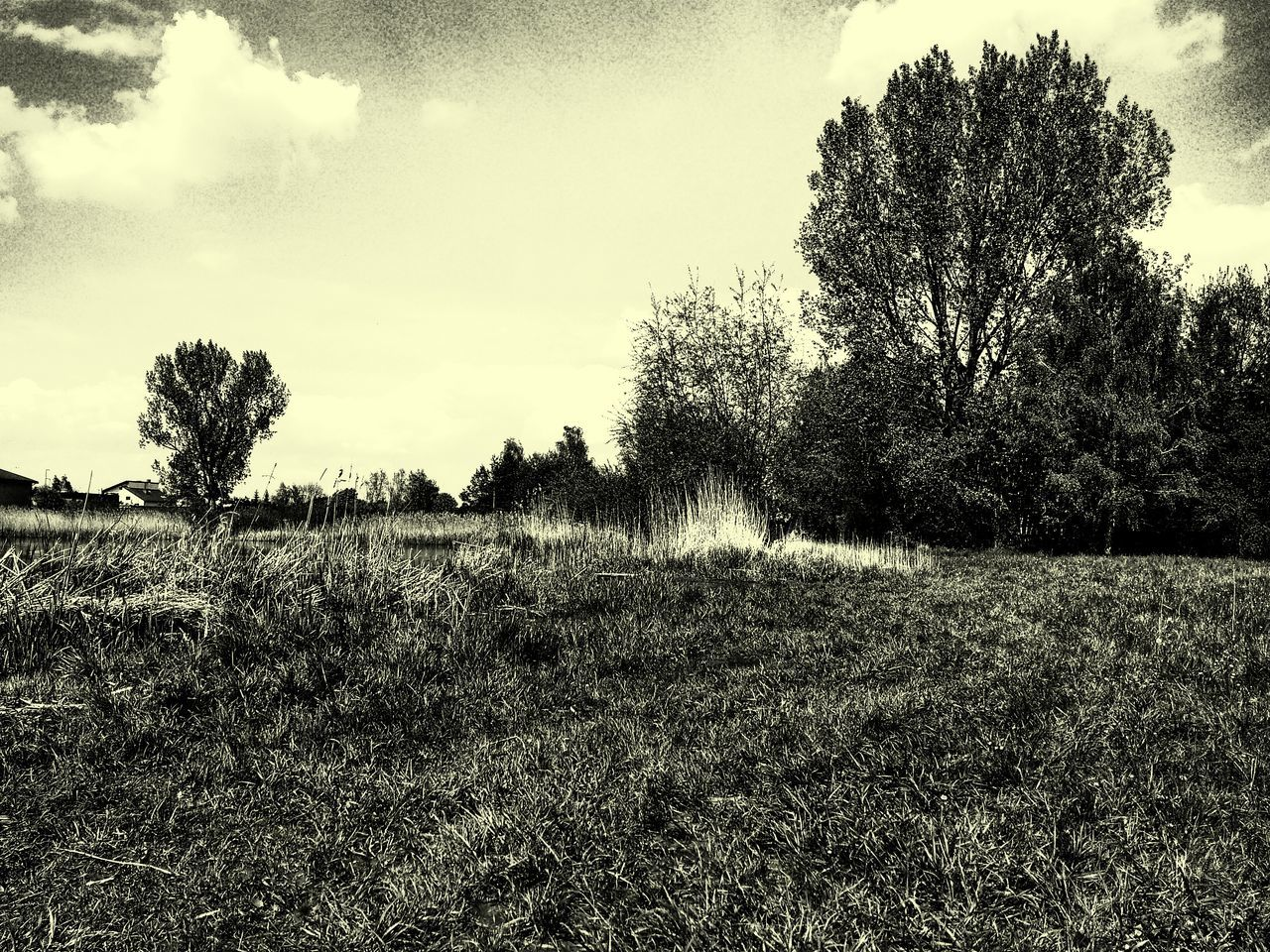 Sky Cloud - Sky Outdoors Nature No People Day Tree Water Beauty In Nature EyeEmNewHere Nature Cloud And Sky Cloud Trees And Sky Clouds And Sky Beautiful Nature Trees EyeEm Nature Lover Black & White Grass Reeds Pond Blackandwhite Black And White Eyeem Market
