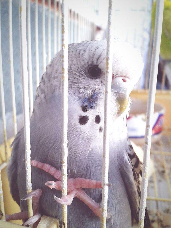 Cute Focused Photo Cute Animals Cute Pets Cuteeee♥♡♥ Cute♡