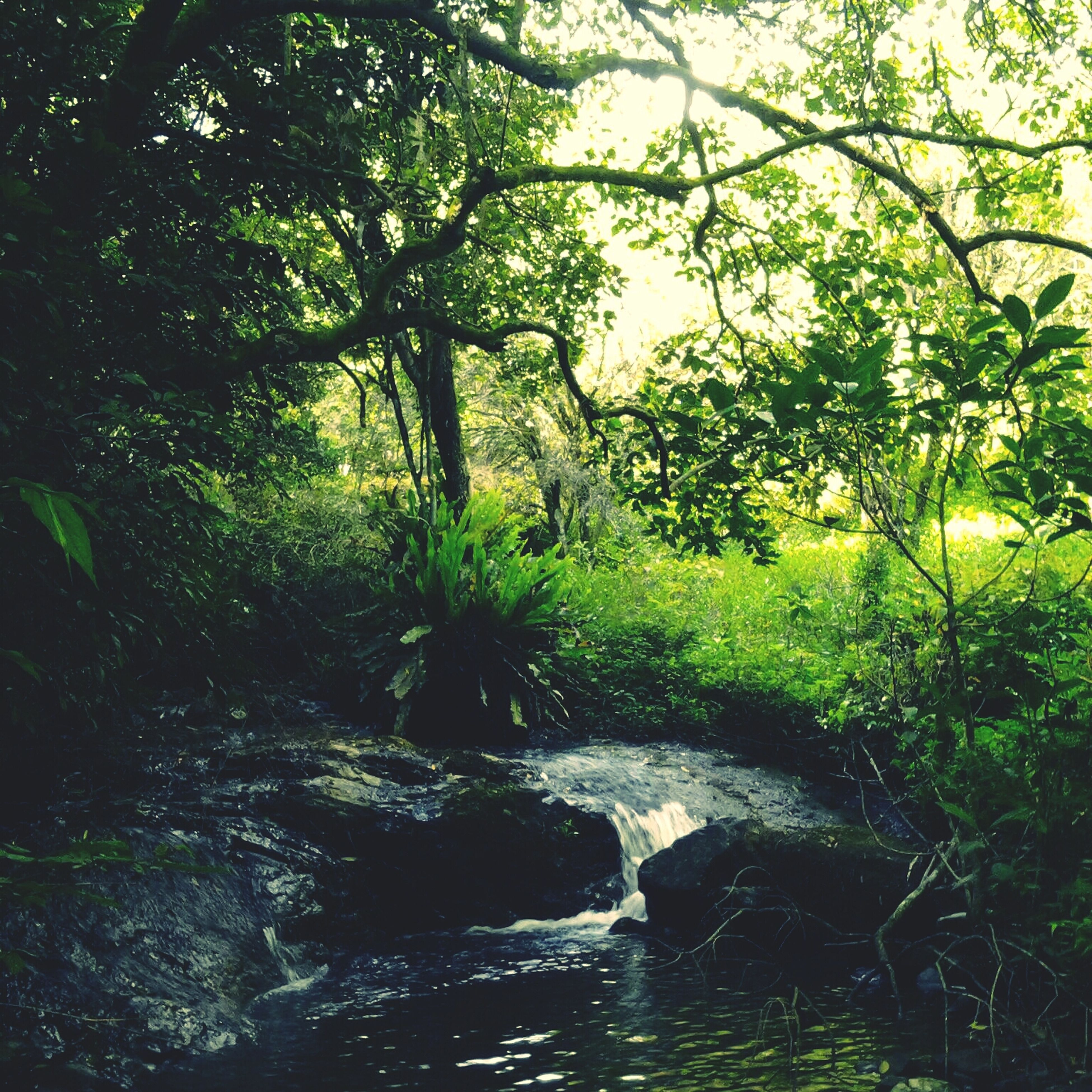 water, tree, green color, tranquility, growth, beauty in nature, nature, tranquil scene, scenics, forest, stream, river, waterfront, plant, branch, lush foliage, day, flowing water, idyllic, non-urban scene