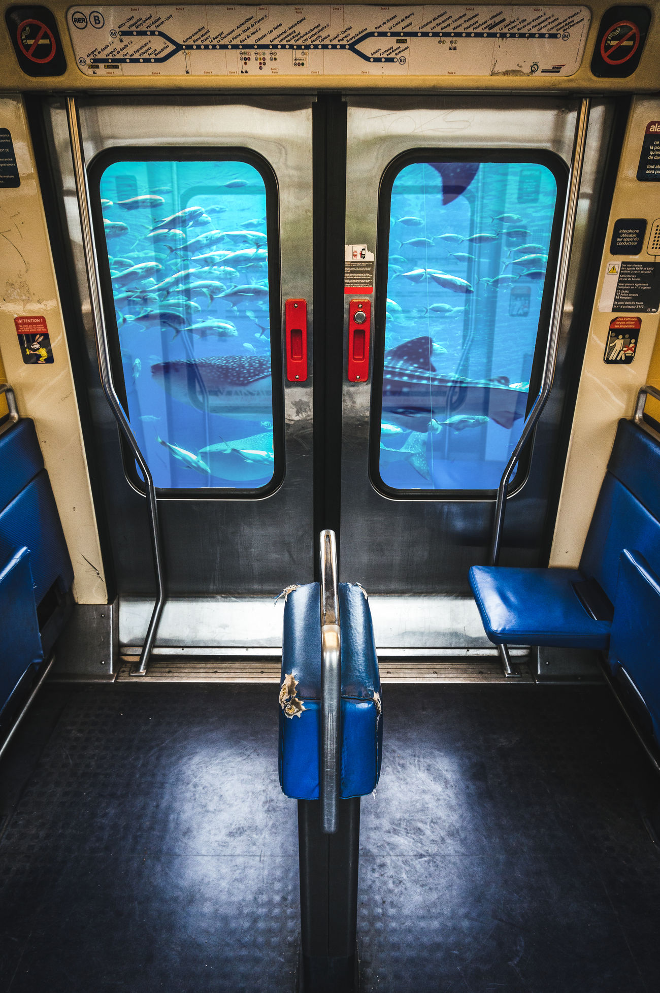 Fish RER RerB Paris Paris, France  Paris Je T Aime Hello World Check This Out Taking Photos Through The Window Delight  Colors Picoftheday Transportation Subway Station Shark Animals Blue Underthesea Submarine Underwater Windows Poisson Weird Requin