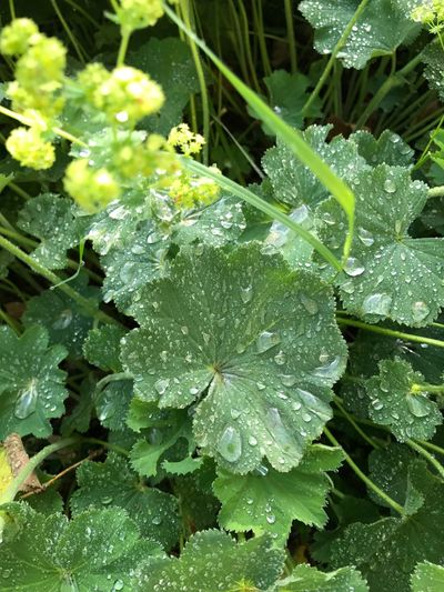 Leaf Drop Water Green Color Wet RainDrop Freshness Nature Growth Beauty In Nature Day Plant Close-up No People Outdoors