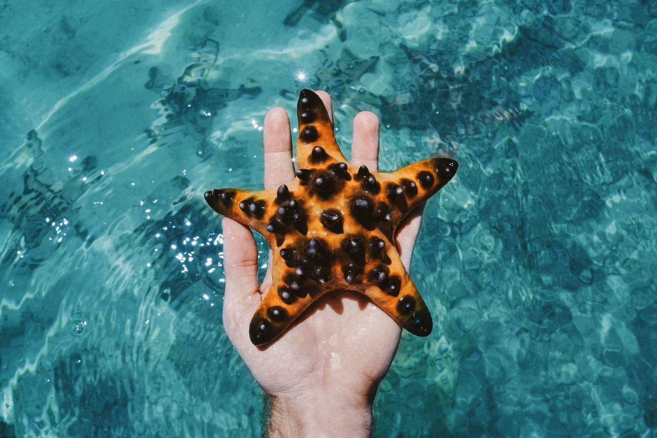 Seastar Orange Color Turquoise Water Sea Beach Nature Animals INDONESIA Sulawesi Bunaken Hand From My Point Of View TakeoverContrast Beautifully Organized