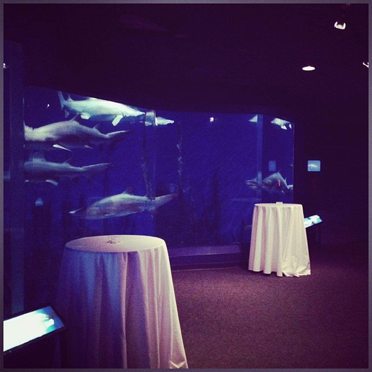 Cocktail hour while watching sharks? Sure! Theflorallife Florist Weddings Sharktank