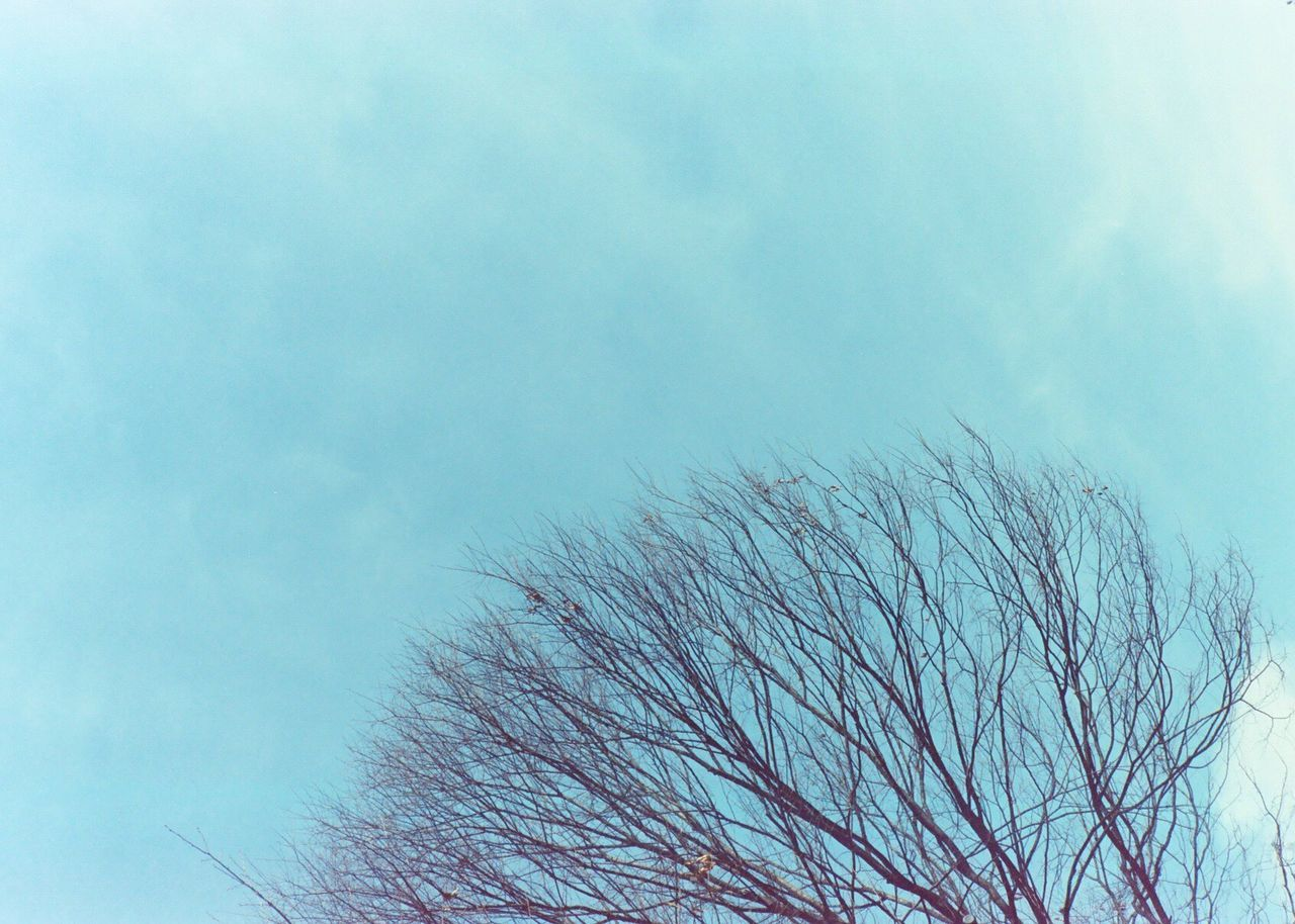 low angle view, nature, day, beauty in nature, sky, no people, bare tree, outdoors, tree, close-up