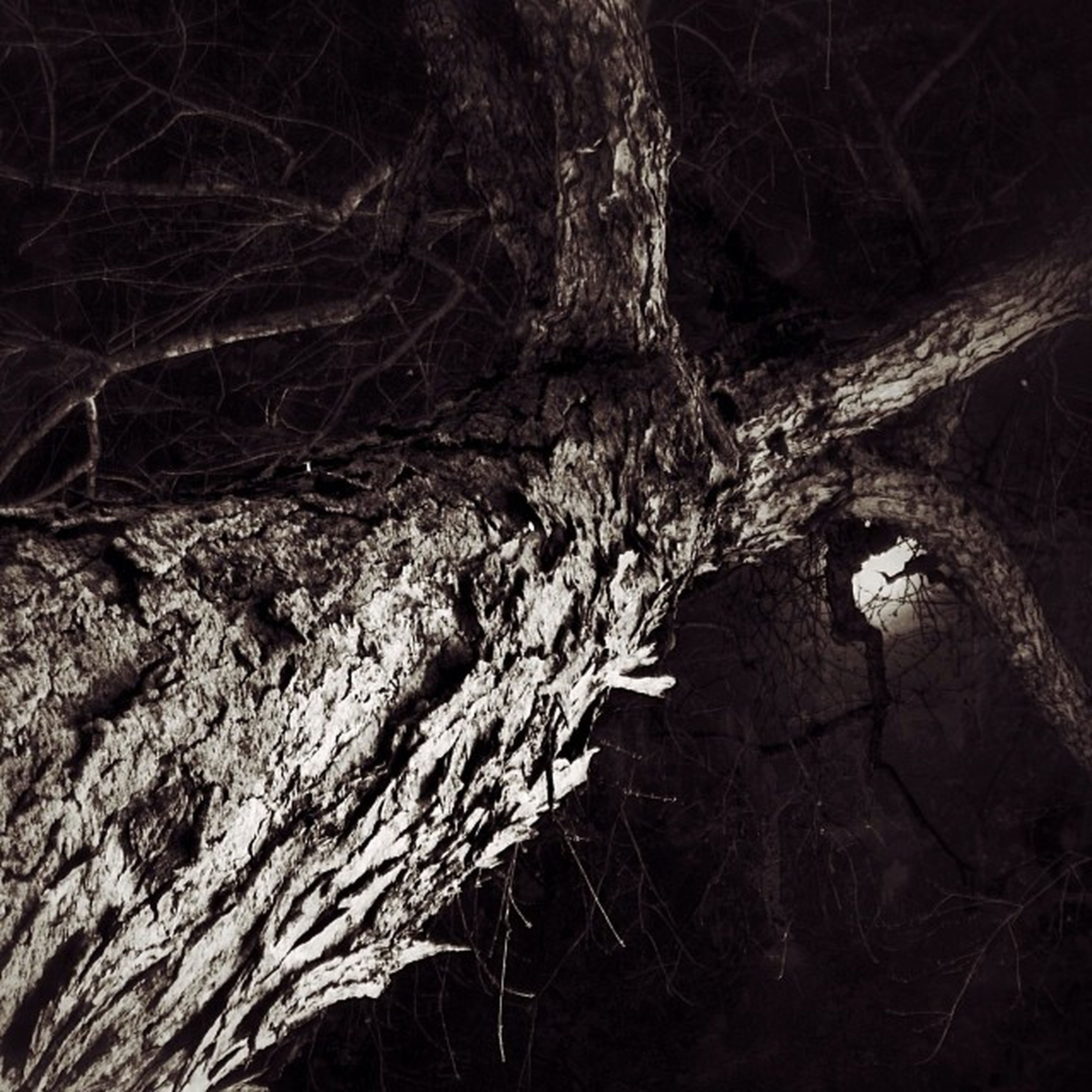 tree, tree trunk, forest, branch, night, nature, bare tree, tranquility, growth, close-up, textured, outdoors, woodland, dead plant, beauty in nature, no people, natural pattern, wood - material, dark, plant