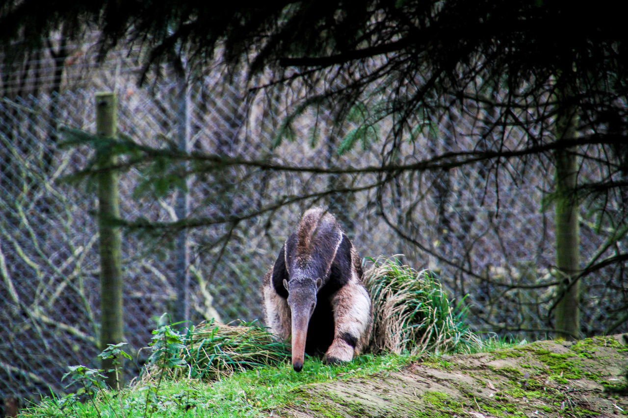 Animal Animal Photography Animal Themes Animal Wildlife Animal_collection Animals Anteater Day Nature Outdoors