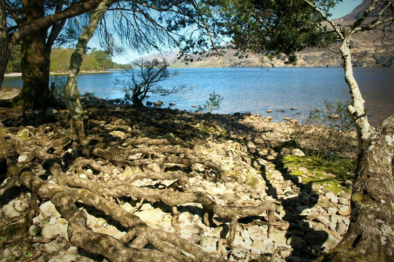 Loch Maree Scotland Loch  Trees Water Roots Sunlight Shadow Growth Sky Tree Beauty In Nature Outdoors Nature Day No People Landscape Scenics Lake Mountain Highlands Tree Trunk
