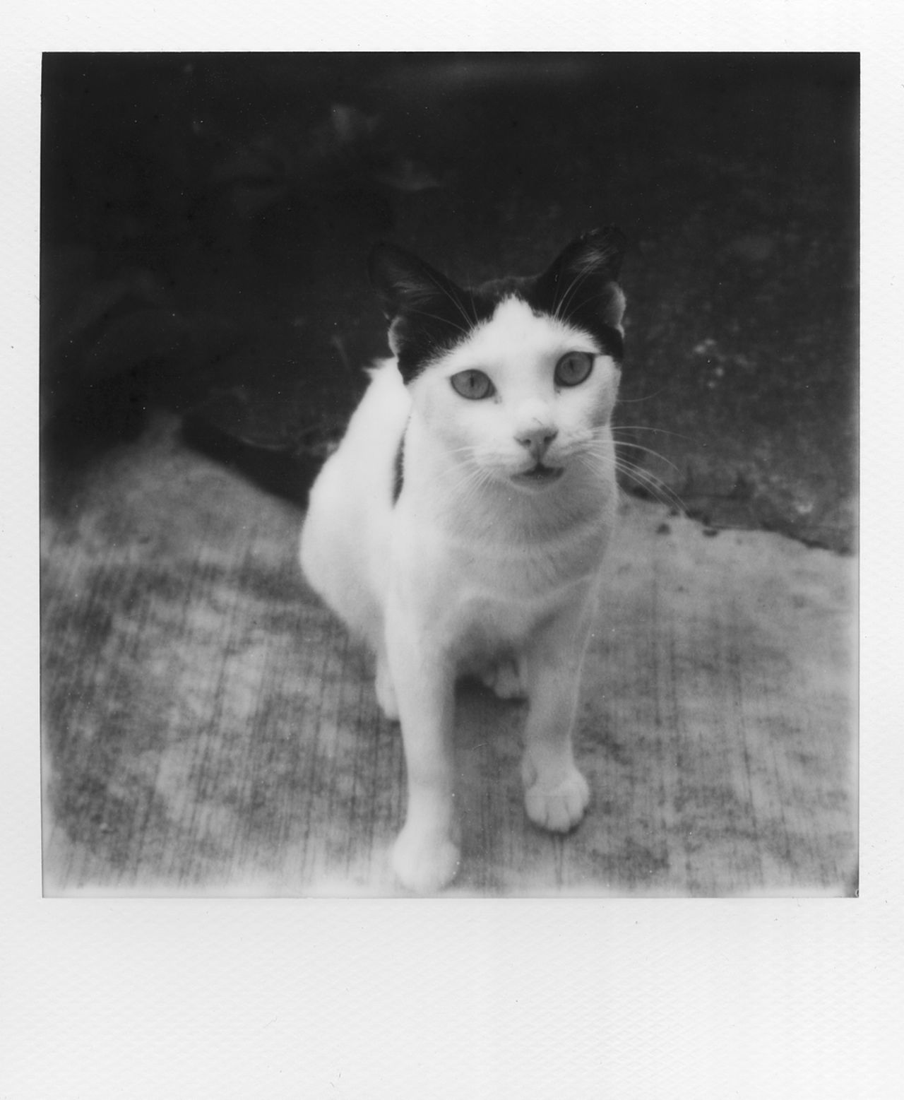 Animal Animal Themes Cat Close-up Day Domestic Animals Domestic Cat Feline Indoors  Looking At Camera Mammal No People One Animal Pets Portrait Whisker