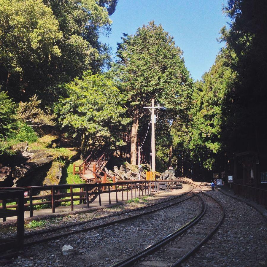 National Park Alishan Taiwan Traveling Nature Trees Train Tracks Popular Photos Open Edit